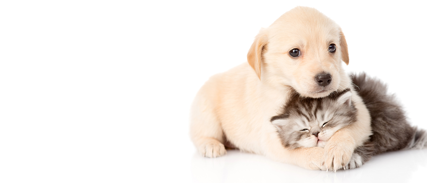 WE CARE FOR YOUR PET